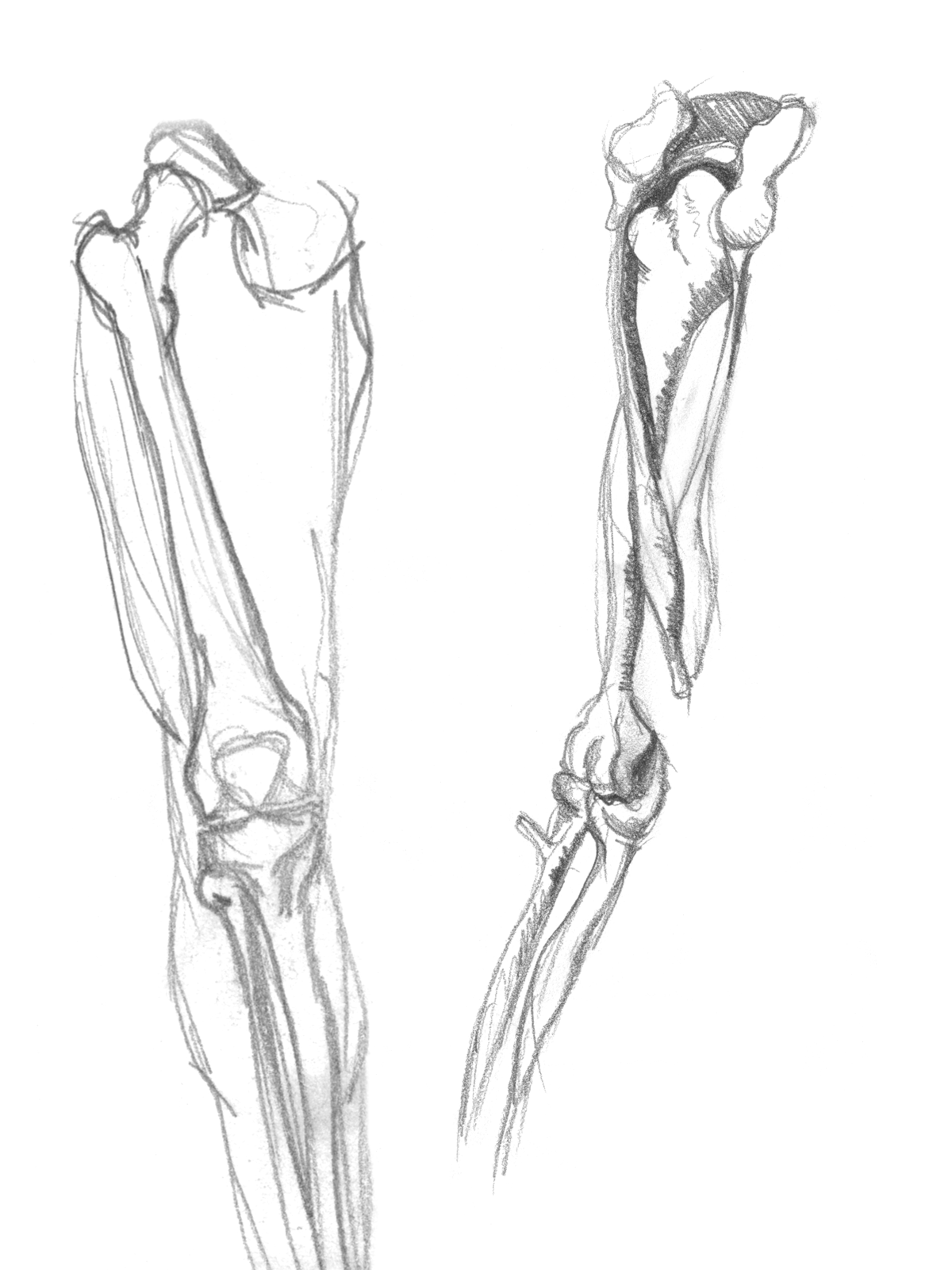 Leg and arm Drawing